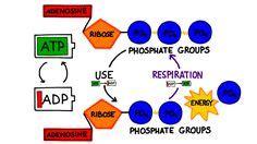 Journal of Molecular Biology - Elsevier